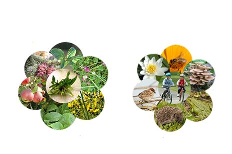 Fotosintezė ir kvėpavimas – priešingi procesai