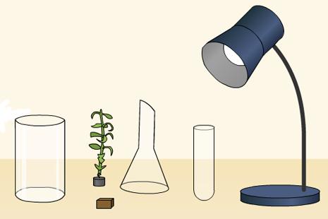 Fotosintezės metu išsiskyrusių dujų tyrimas