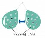 1145_neigiami_kruviai.jpg